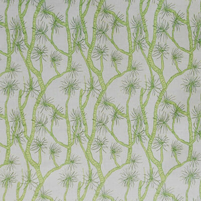 calliandra_green-nat